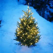 Pea Ridge Christmas Tree Farm by Real Christmas Tree Farm Christmas Lights Decoration