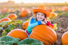 Pumpkin Patch Near Clovis Ca by Austin Real Estate News