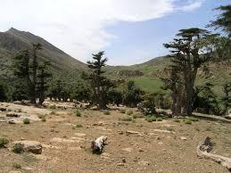 خنشلة بلاد الشاوية (1).............. images?q=tbn:ANd9GcS
