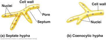 الفطريات تعريفها أنواعها وأشكالها Fungus types
