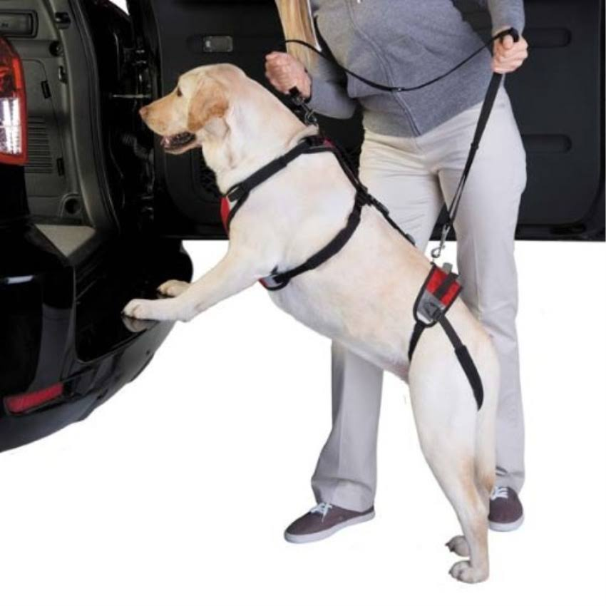 Total Pet Health Lift & Go Lead S Red