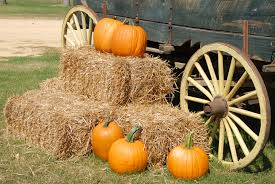 Pas Pumpkin Patch 2017 by Pumpkin Spice Up Your Time This Fall Rev 21 Media