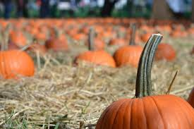 Boos Pumpkin Patch Nebraska City by Best Things To Do In The Fall In Nyc Including Halloween Events