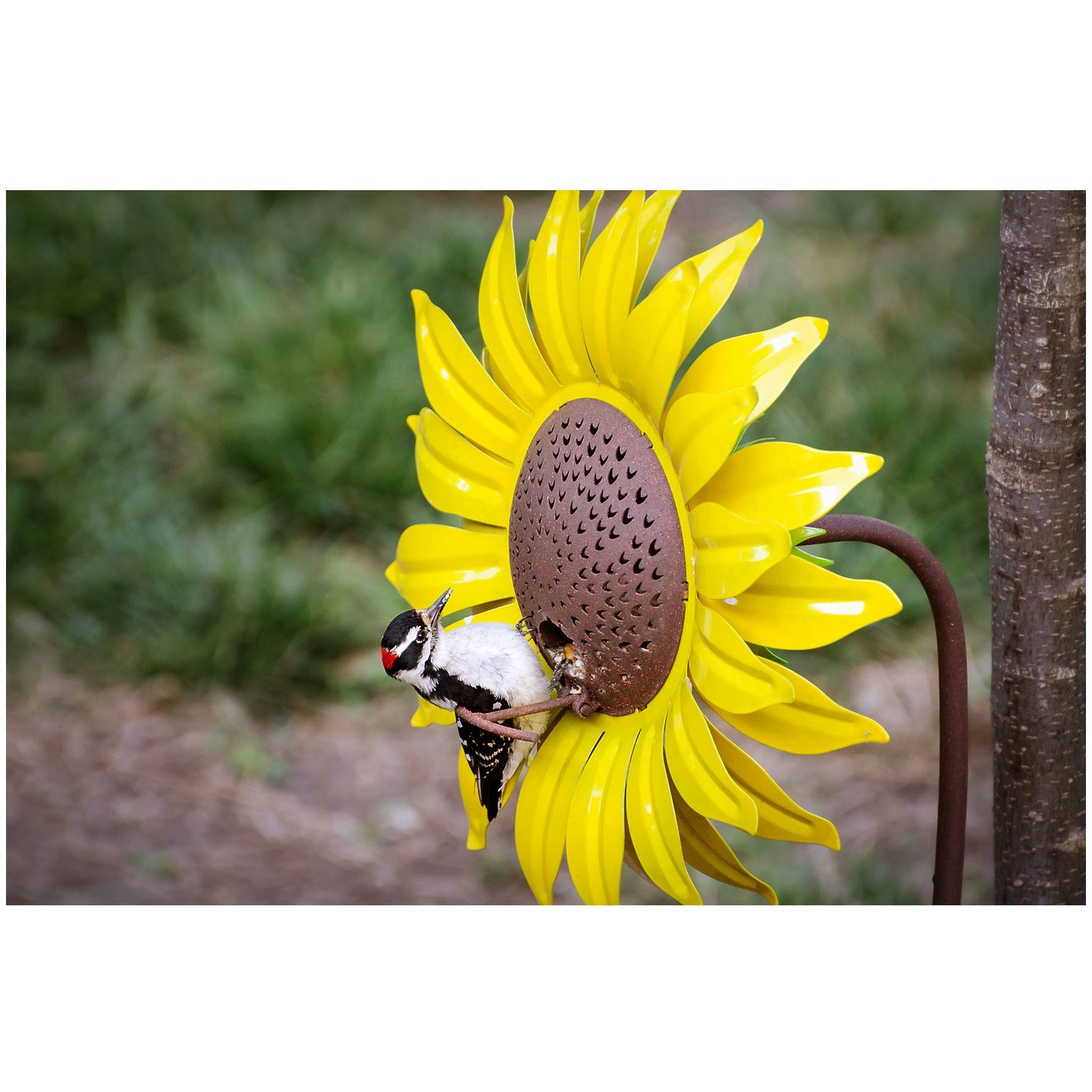 Desert Steel Sunflower Bird Feeder - Yellow, 42""