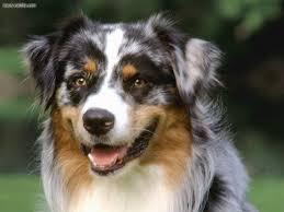 Tiny Non Shedding Dog Breeds by Cute Non Shedding Dog Breeds Breed Dogs Spinningpetsyarn