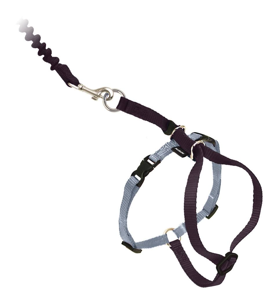 PetSafe Come With Me Kitty Harness and Bungee Leash - Black, Small