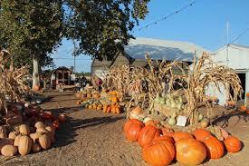 Pumpkin Patch Near Clovis Ca by Parks Zoos Museums U2014 Merced County Events