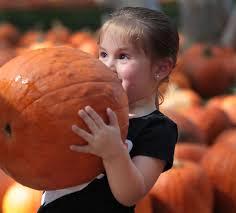 Pumpkin Patch Bakersfield California by Photo Gallery It U0027s Autumn At Banducci U0027s Family Pumpkin Patch