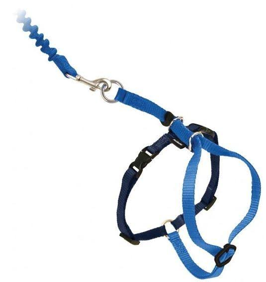 PetSafe Come With Me Kitty Harness And Bungee Leash - Royal Blue, Small