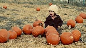 Free Pumpkin Patch Houston Tx by Where To Find Pumpkin Patches In San Antonio