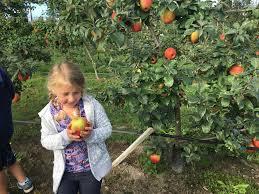 Pumpkin Patch Spokane Valley Wa by Best Apple Picking Orchards In Washington State