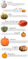 Minecraft Grow Pumpkins Fast by Best 25 Humanity House Ideas That You Will Like On Pinterest