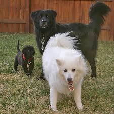 اكبر مجموعة كلاب من تجميعي - صور كلاب مفترسة - صور كلاب بوليسية شرسة - صور كلاب كيوت - Dogs photos images?q=tbn:ANd9GcT
