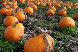 Pumpkin Patch Petting Zoo Dfw by 2015 Fall Festivals Pumpkin Patches U0026 Trick Or Treat Events