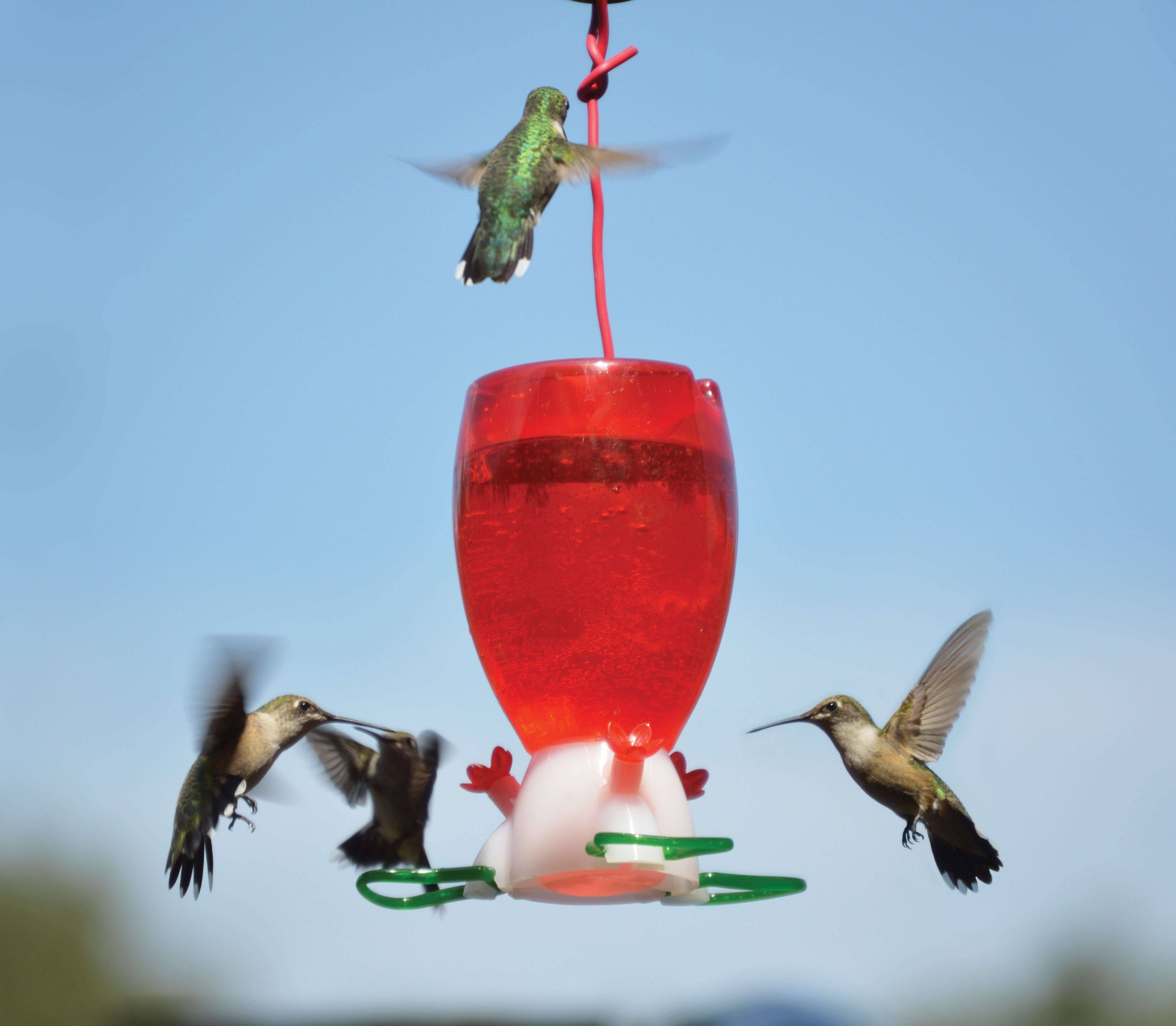 Songbird Essentials SE952 Big Red Hummingbird Feeder