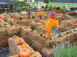 Boos Pumpkin Patch Nebraska City by Best 25 Hay Maze Ideas On Pinterest Fall Fest Halloween