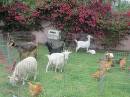 Pumpkin Patch Petting Zoo Dfw by Petting Zoo Birthday Party Nashville Tn Image Inspiration Of