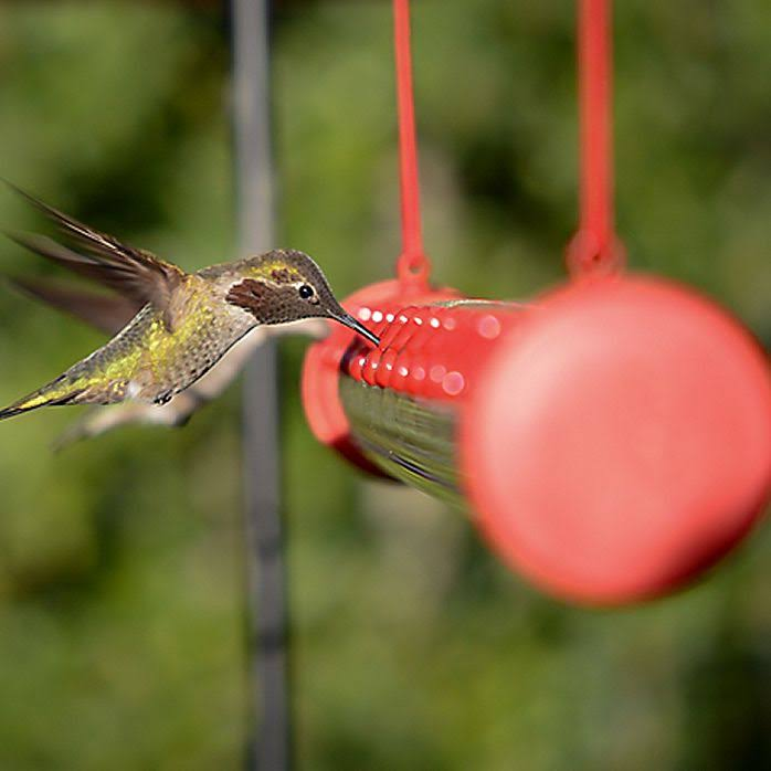Perky-Pet Hummingbird Feeder Bar