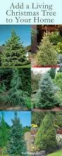 Christmas Tree Species Name by 55 Best Holiday Garden Decor Images On Pinterest Plant Catalogs