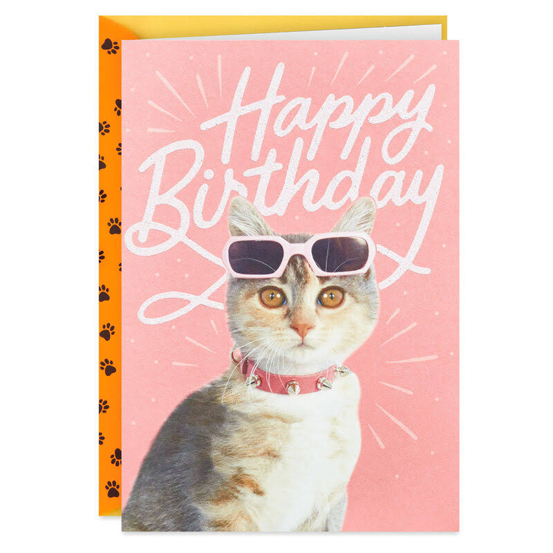 Cool Cat Wearing Shades Birthday Card