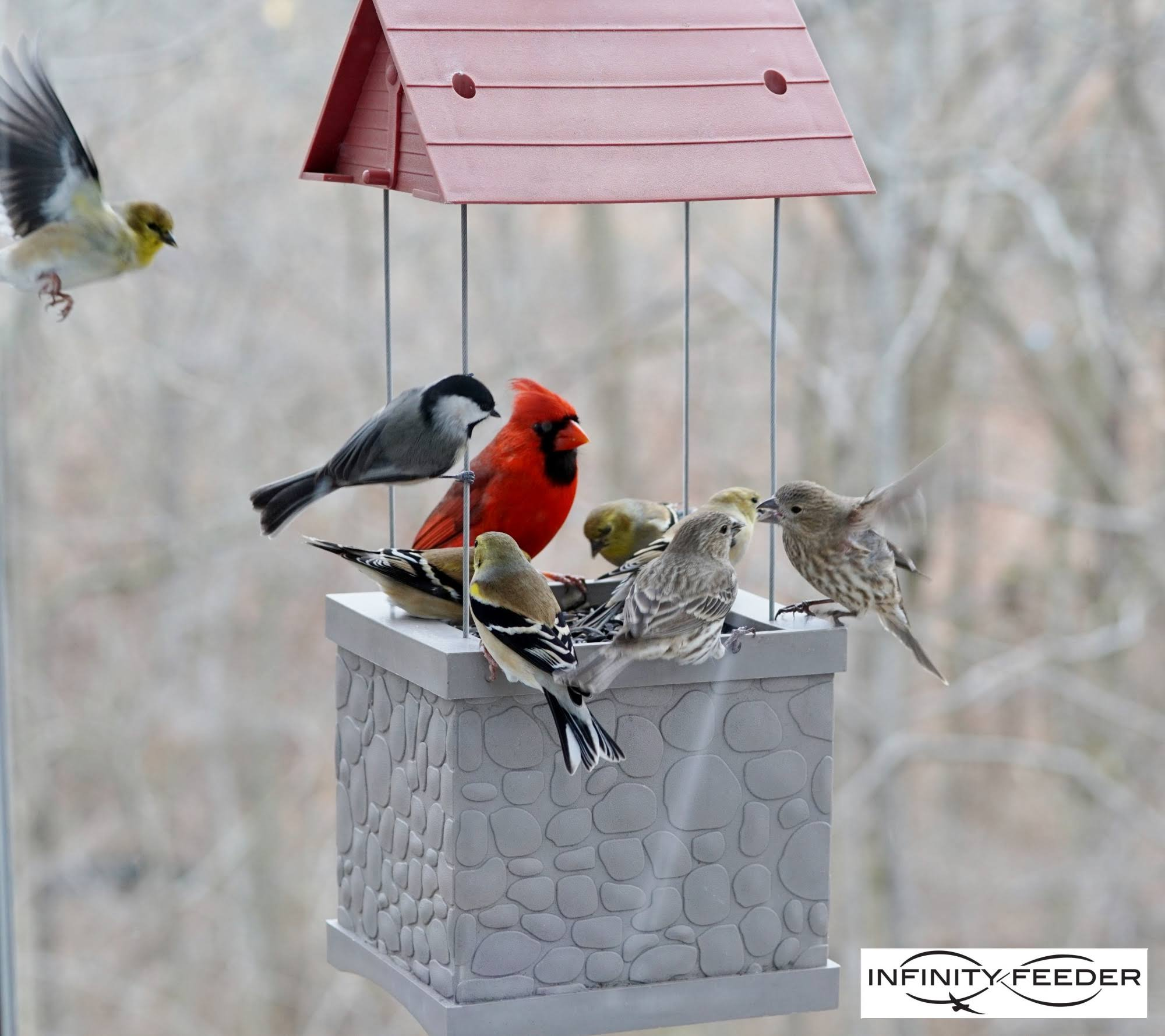Heath Infinity Bird Feeder
