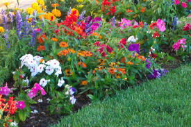 Flowers For Flower Beds by Exterior Flower Garden Layouts Designs Flowers Three With Best In