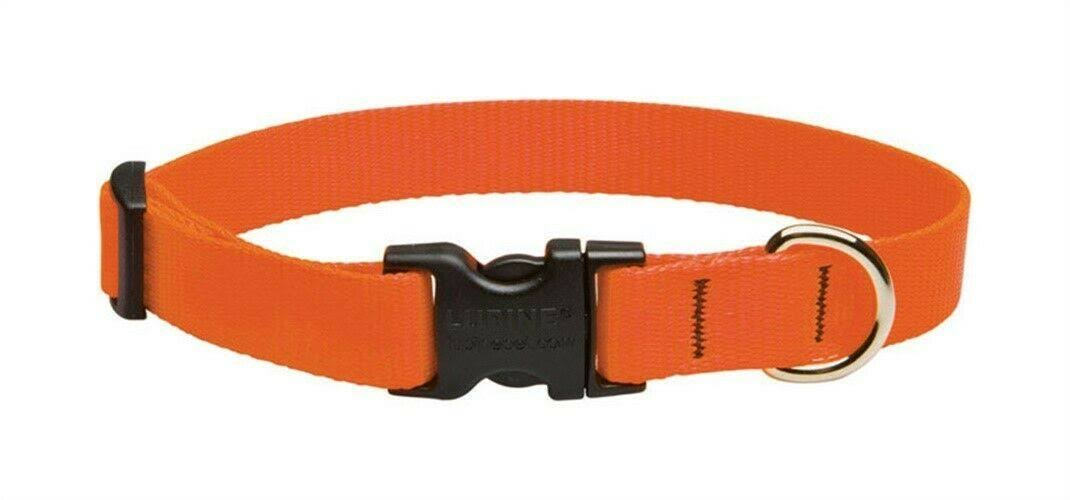 Lupine Dog Collar - Blaze Orange