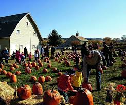 Free Pumpkin Patches In Colorado Springs by Pick Your Pumpkin At Eagle Ranch Patch Vaildaily Com