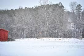 Blue Heeler Shedding In Winter by Blue Heelers She U0027s Dairy Made